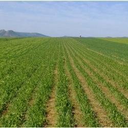 农业用制硼肥